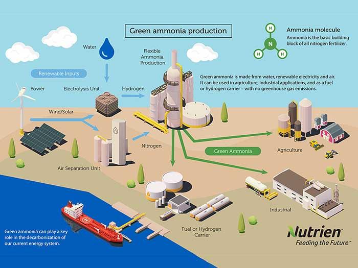 Green ammonia infographic